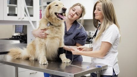 Autoimmune Disease In Dogs: Types, Symptoms, And Treatments