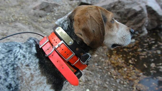 dog with many collars