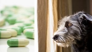 Fluoxetine For Dogs: Uses, Dosage, And Side Effects