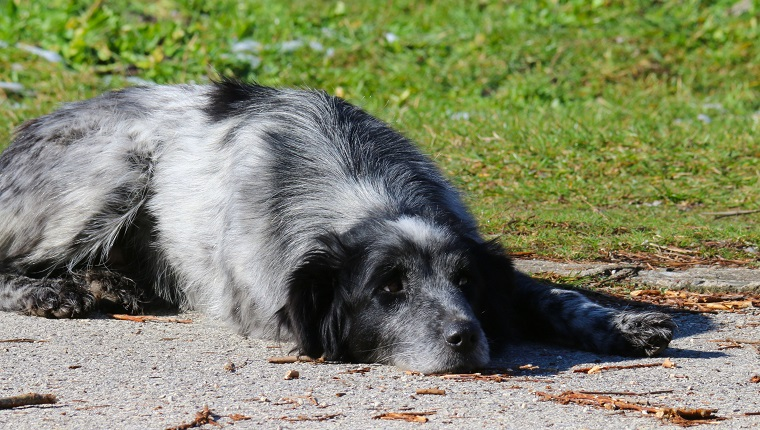 Sad Dog Lying On Footpath