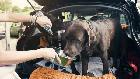 Dehydration In Dogs: Symptoms, Causes, & Treatment