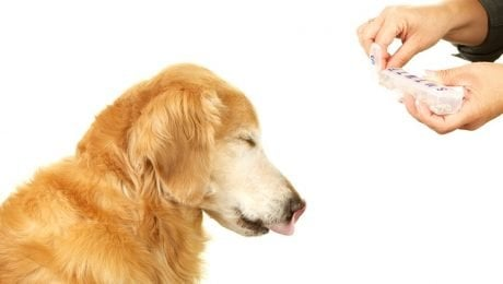 Dexamethasone For Dogs: Uses, Dosage, And Side Effects