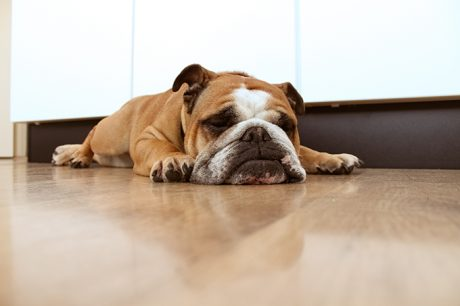 Do Dogs Dream? If So, What Do Dogs Dream About?