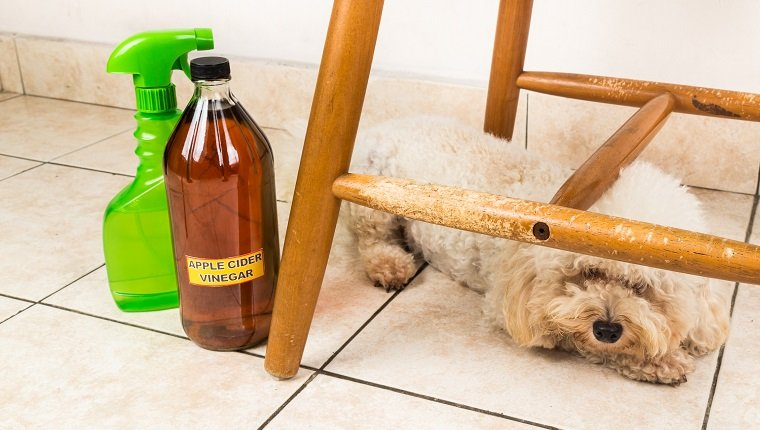 What Fleas & Bites On Dogs Look Like & Home Remedies To Get