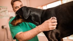 Cardiomyopathy In Dogs: Symptoms, Causes, & Treatments