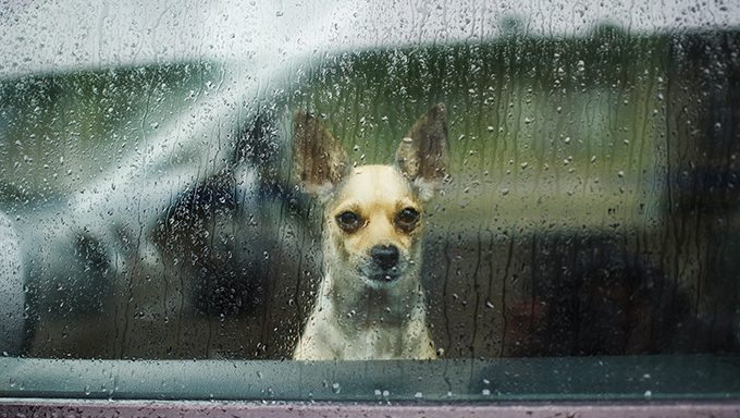 dog looking out window in rain