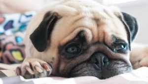Stroke In Dogs: Symptoms, Causes, & Treatments