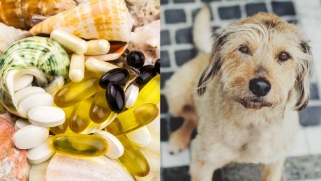 Glucosamine For Dogs: What Is It And What Does It Do?