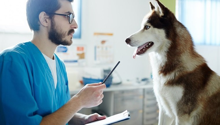 Young veterinarian talking to his patient