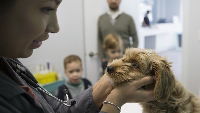 Veterinarian examining dog in clinic examination room