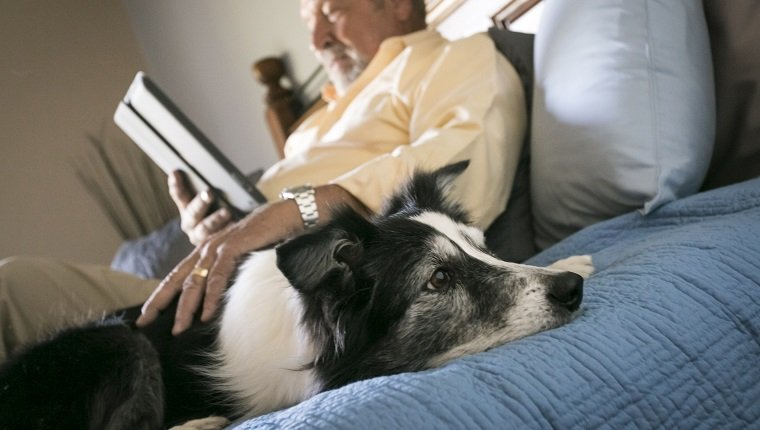 Older man laying on bed with dog reading digital tablet