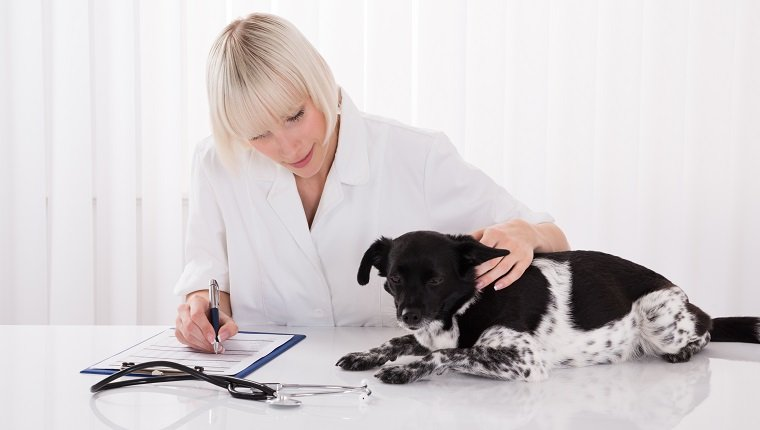 Female Veterinarian Writing Prescription For Dog After Medical Examination