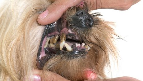 Periodontal Disease In Dogs: Symptoms, Causes, & Treatments