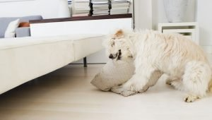 Pica In Dogs: Symptoms, Causes, & Treatments