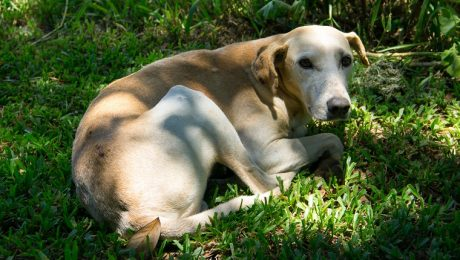 Rimadyl For Dogs: Uses, Dosage, & Side Effects