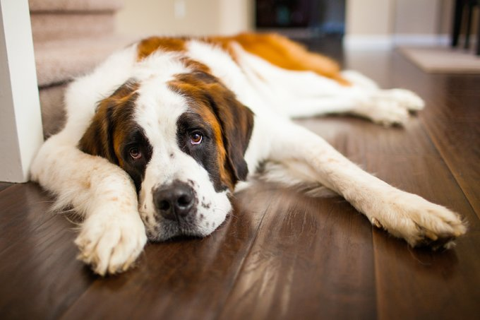 The Silent Killer: Zinc Deficiency And Your Dog - Dogtime