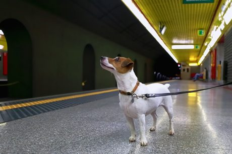 Using Public Transportation With Your Dog
