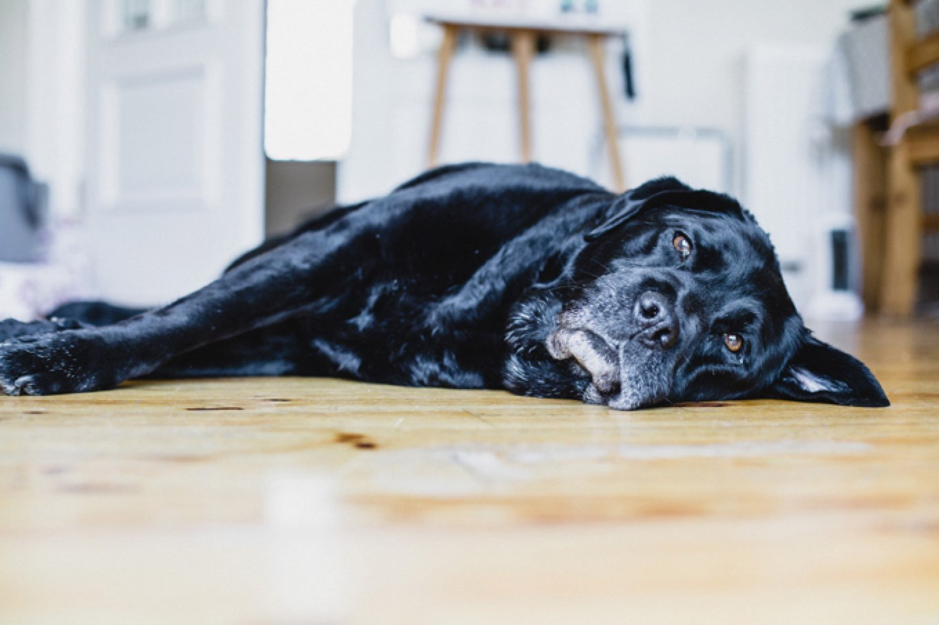 The Silent Killer Zinc Deficiency And Your Dog Dogtime