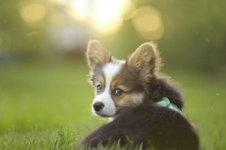 30 Amazing Dog And Puppy Facts To Share With Kids [PICTURES]