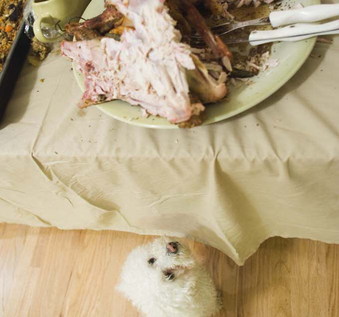 Thanksgiving meal with dog