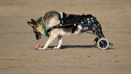Paralysis In Dogs: Symptoms, Causes, & Treatments