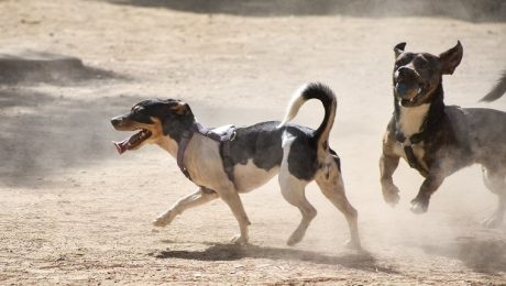Valley Fever In Dogs: Symptoms, Causes, & Treatments