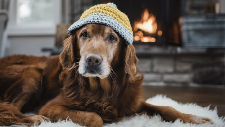 Adorable Dogs Warming Themselves By The Fire [PICTURES]