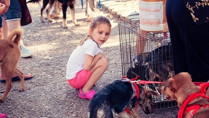 young girl with shelter dogs