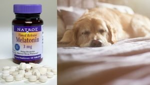 Melatonin For Dogs: Uses, Dosage, & Side Effects