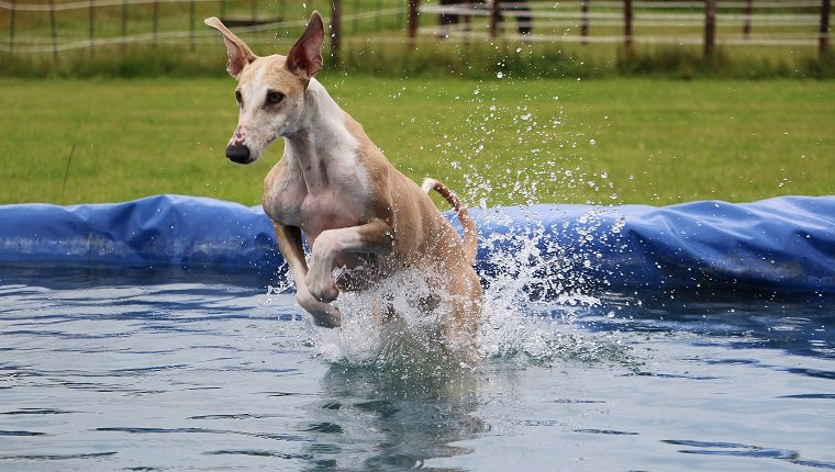 witziger galgo macht party im pool