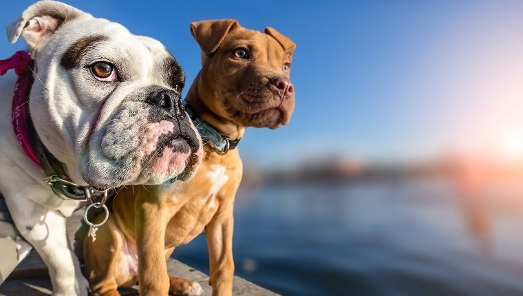 does daycare breed bullies And i certainly do not believe in breed specific legislation  park or at doggy  daycare, was the leading cause for dog aggression and reactivity,.