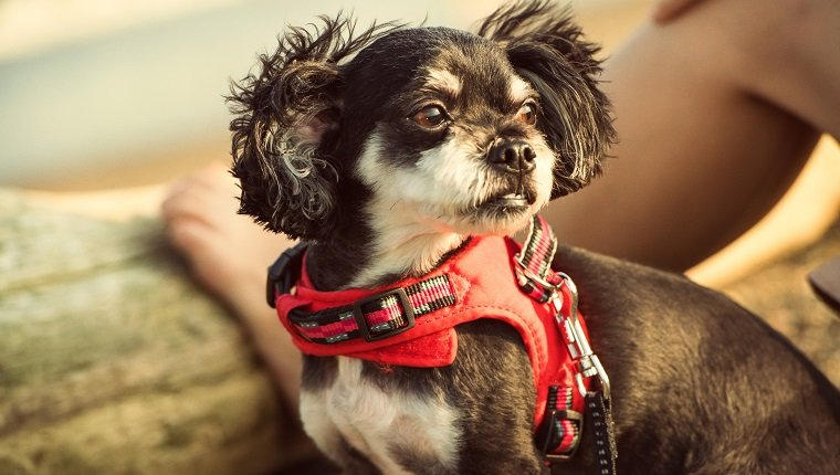 The Right Type Of Dog Harness For Your Dog - Dogtime
