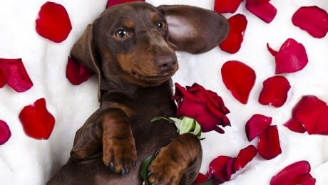 9 Reasons Your Dog Should Be Your Valentine [VIDEO]