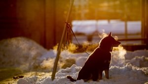 Dogs Still Freezing To Death Despite Strict New Laws In 2018–What Can We Do?