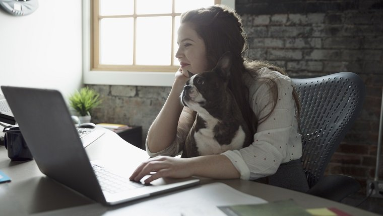 Creative businesswoman working at laptop with dog in lap