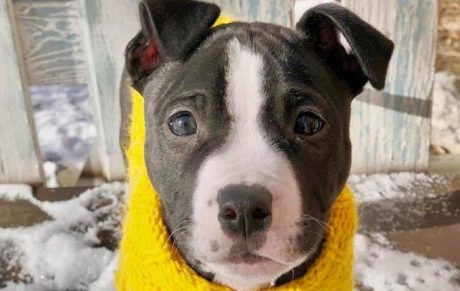 30 Awesome Names For Pitbulls