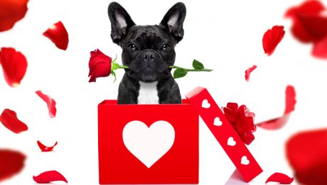 24 Dogs Who Want To Be Your Valentine! [PICTURES]
