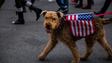 Presidents Day: 10 Dogs Who Should Be Elected President