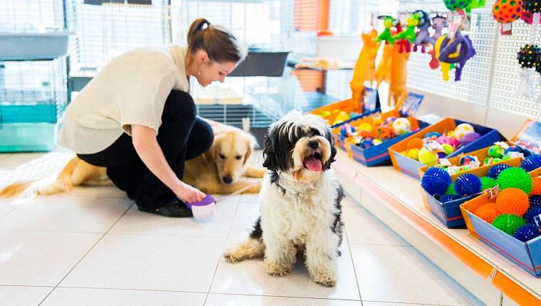 Cute Tibetan Terrier and Golden Retriever with young woman ownwr in pet store resting.