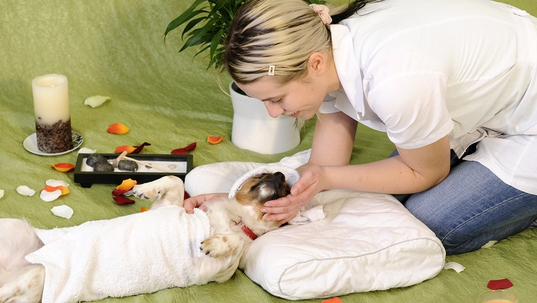 dog receiving a spa treatment