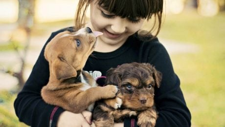 National Puppy Day: 5 Ways To Help Puppies In Need