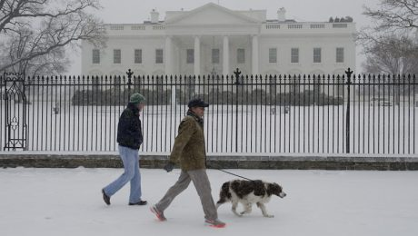 Dogs In The White House: What Makes A Dog Presidential?