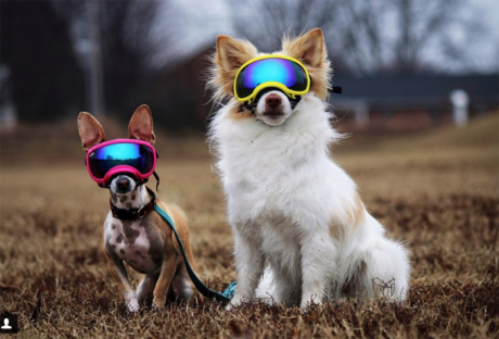 30 Small Dogs With Superior Names [PICTURES]