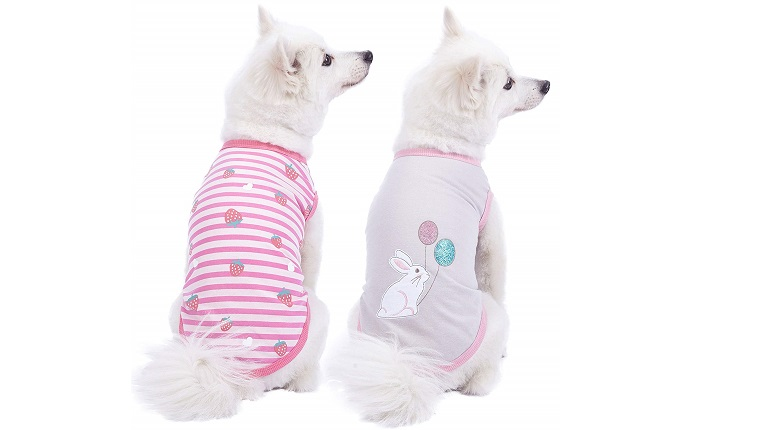 dog easter shirts