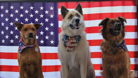 Official U.S. State Dogs & How To Get One If Your State Doesn't Have One