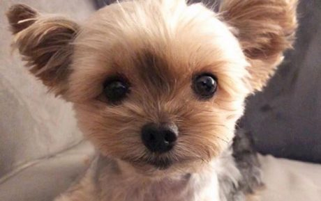 The Best Names For Yorkie Dogs Plus Adorable Pics [GALLERY]