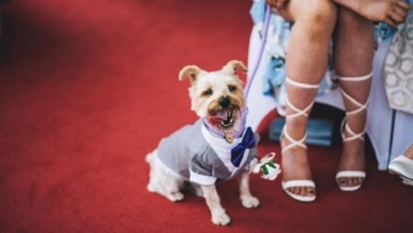 9 Awesome Ways People Included Dogs In Their Weddings