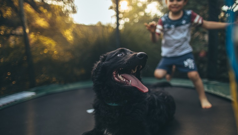 Portrait of cute, smiling, little boy and his pet dog, jumping on a trampoline