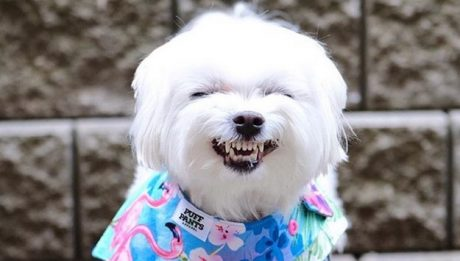 Best Dog Names: 30 Mighty Maltese Dog Names [PICTURES]