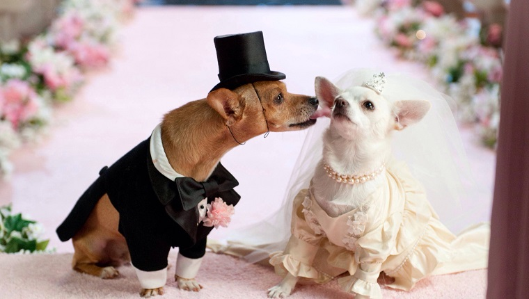 Close-Up Of Dogs In Bride And Groom On Pink Textile